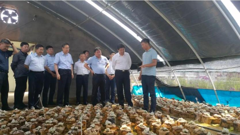 吉林省政府副省长阿东一行考察千济方桑黄产业园