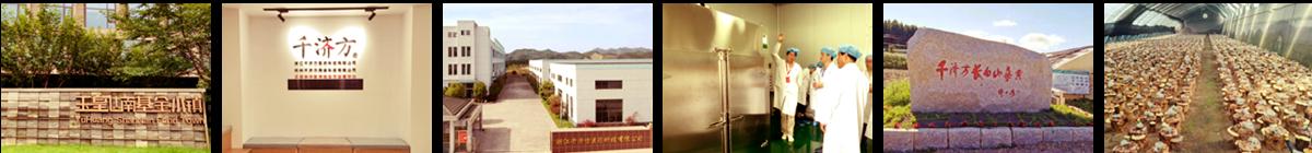 浙江千济方医药科技有限公司,专业从事桑黄种植、研发、生产、销售一体化的实体企业。